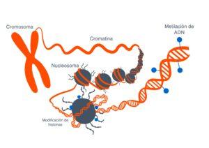 herencia epigenética